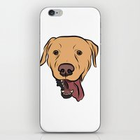 levi iPhone & iPod Skins featuring Levi the Yellow Lab by Rachel Barrett