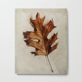 portrait of an oak leaf Metal Print