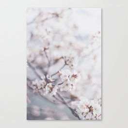 . flower day dream . Canvas Print