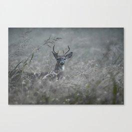 Foggy Morning Buck Canvas Print