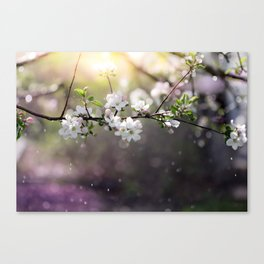 Spring magic Canvas Print