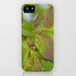 Blueberry Dew iPhone Case