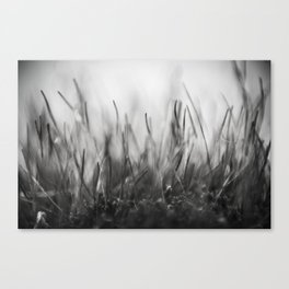 Moskow moss Canvas Print
