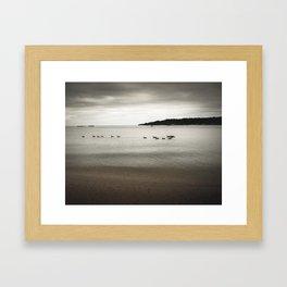 Ducks in the bay Framed Art Print