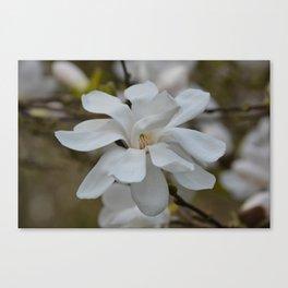 Blooming Magnolia Canvas Print