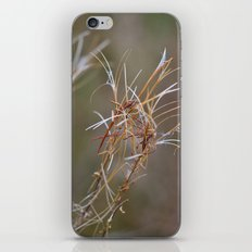 Flower Seed Heads iPhone & iPod Skin