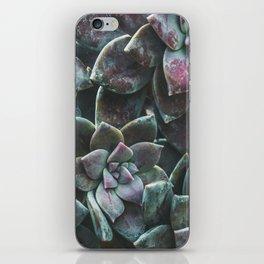 Botanical Gardens II - Succulents #157 iPhone Skin