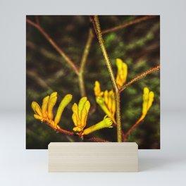 Yellow Kangaroo Paw flower against a blurred background Mini Art Print