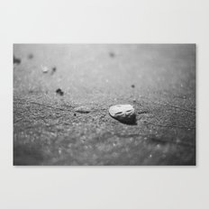 Ocean's Currency Canvas Print