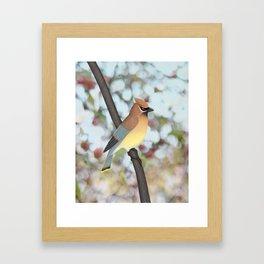 cedar waxwing - bokeh Framed Art Print