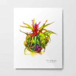 Tillandsia Streptophylla Air Plant Metal Print