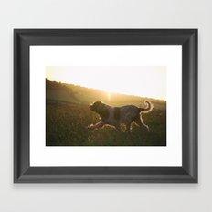 Brown Roan Italian Spinone Dog Framed Art Print