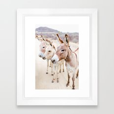 Three Donkeys in Baja, Mexico Framed Art Print