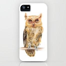 Animals | Owl Watercolour Print | Philippine Scops Owl | Painting iPhone Case