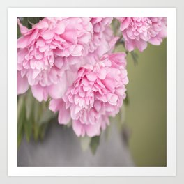 Pink Peonies On A Green And Grey Background  Art Print