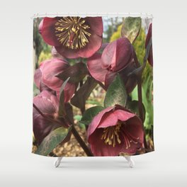 Helleborus Shower Curtain