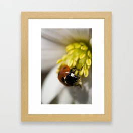 Lady Bird on Pollen Framed Art Print
