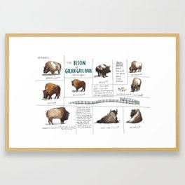 The Bison of Golden Gate Park from Meanwhile in San Francisco Framed Art Print