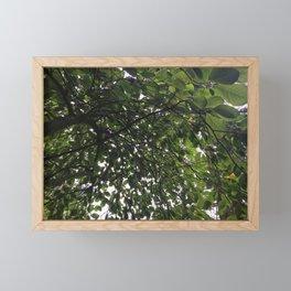 Umbrella Tree Framed Mini Art Print