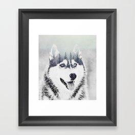 Huskie Framed Art Print