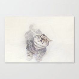 Cat in a white tulle Canvas Print