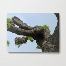 Poplar Tree Metal Print