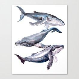 Humpback Whales, three whales illustration Canvas Print