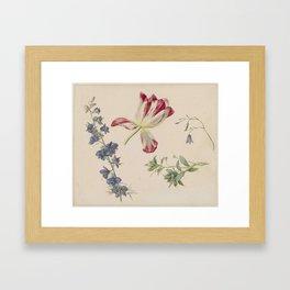 Flower Studies, Albertus Jonas Brandt, 1798 - 1821 Framed Art Print