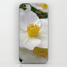 white anemone iPhone & iPod Skin