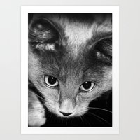 kitten Art Prints featuring kitten by Bunny Noir