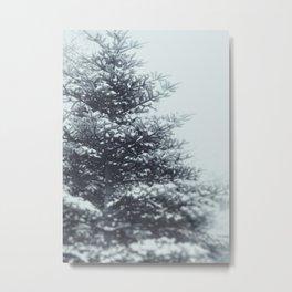 Spruce Metal Print