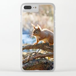 Squirrel on branch Clear iPhone Case