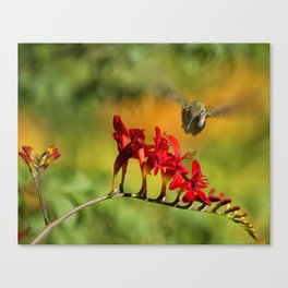 Hummingbird Materializing Canvas Print