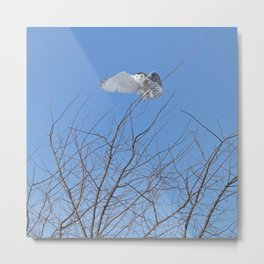 Snowy owl above the trees Metal Print