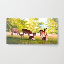 Fallow Herd Metal Print