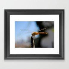 Libélula | Dragonfly Framed Art Print