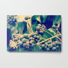 Blackberry Metal Print