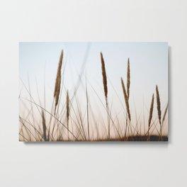 Beach grass III   Calm natural fine art print   Netherlands Metal Print