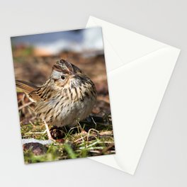 Staredown with a Lincoln's Sparrow Stationery Cards