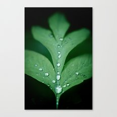 Drops of Rain Canvas Print