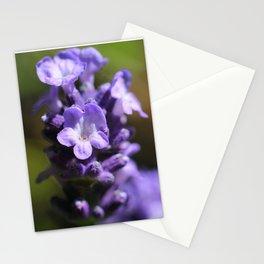 Lavender purple flower plant Stationery Cards