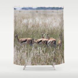 Thomson gazelles landscape, Serengeti National Park, Tanzania Shower Curtain