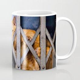 Sleepy street cat Coffee Mug