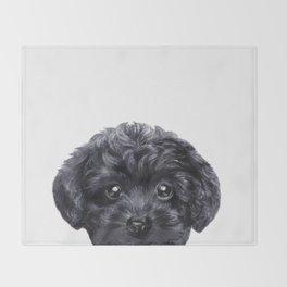 Toy poodle Black Decke