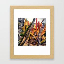 gardens of Barcelona. cactuses Framed Art Print