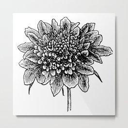 pincushion flower - stamp Metal Print