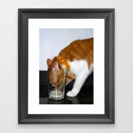 Funny Cat Drinking from Glass Framed Art Print