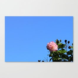 Flower in the Sky Canvas Print