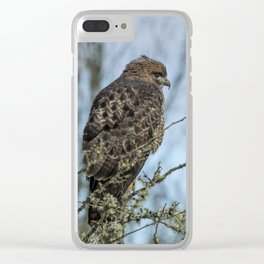 Immature Red-Tailed Hawk Dark Morph Clear iPhone Case