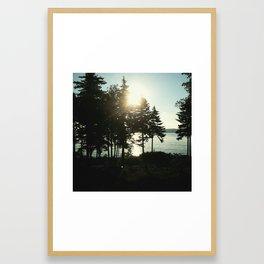 maine pines Framed Art Print
